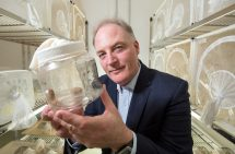 Fruit flies are Australia's most economically damaging insect pests. Image Credit: Chris Stacey