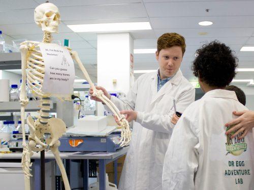 https://webresources.mq.edu.au/newsroom/wp-content/uploads/2018/07/Dr-Egg-Skeleton.jpg