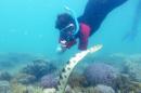 Fantastic grandmother Monique Mazière photographing sea snake number 79, nicknamed Déborah.  Credit: Claire Goiran/UNC