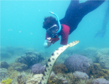 Fantastic grandmother Monique Mazière photographing sea snake number 79, nicknamed Déborah.  Credit: Claire Goiran/UNC