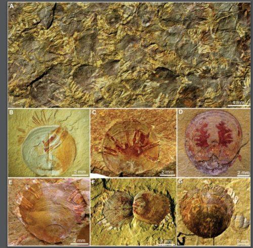 https://webresources.mq.edu.au/newsroom/wp-content/uploads/2020/06/Fossils-showing-parastites.jpg