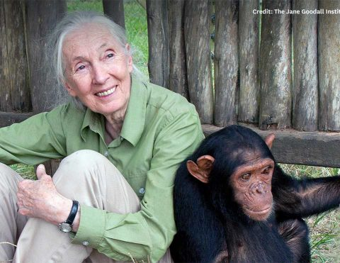 jane_goodall_feature