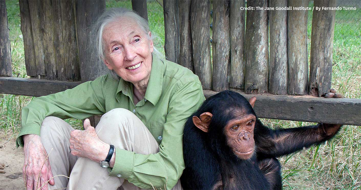 jane goodall The jane goodall center for excellence in environmental studies is a unique  partnership between western connecticut state university and the jane goodall .