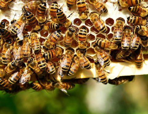 bees_web