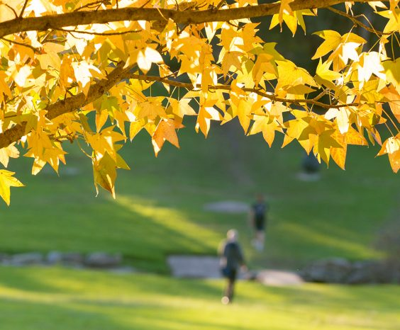 Autumn on campus.
